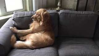 Doggy Makes Himself Comfortable for Afternoon Nap - Video