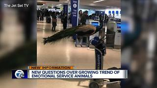 New questions over growing trend of emotional service animals