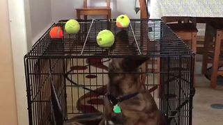 Dog Overthinks A Simple Problem - Video