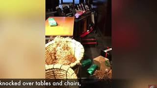 A woman knocked over tables and chairs at Starbucks after employees wouldn't give her change - Video