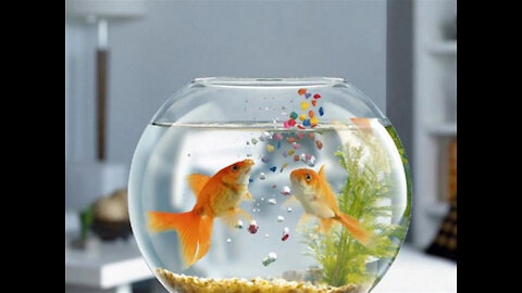 The best natural scenery of ornamental fish.
