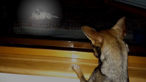 Little dog staying at window watching her mom on bed