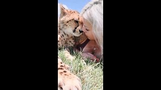 Cheetah cuddles and kisses with girl in South Africa