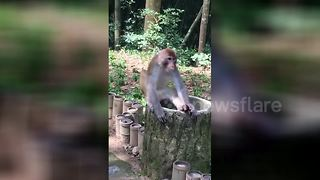 This monkey does not like durian fruit - Video