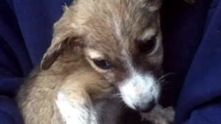 Dying Puppy Brought Home To Pass Peacefully Surprises Mom And Daughter  - Video
