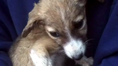Dying Puppy Brought Home To Pass Peacefully Surprises Mom And Daughter