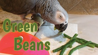Vocal parrot eats green beans and enjoys them
