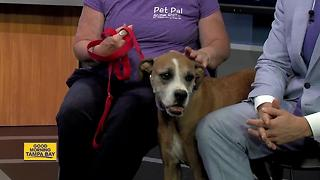 Pet of the week: 10-year-old Benjamin would love to take afternoon walks with you - Video
