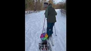 Sports-loving doggy joins owner for skiing adventure