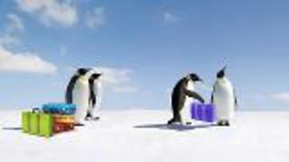 Penguins Respond to Climate Change - Video