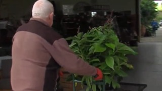 Concern over plants as temperatures fall - Video