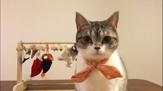 It's nice clothes for a princess cat - Video