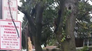 Gusts of Wind Tear Down Trees in New Jersey - Video