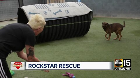 Nick's Heroes: Phoenix woman's animal rescue has saved hundreds across the Valley