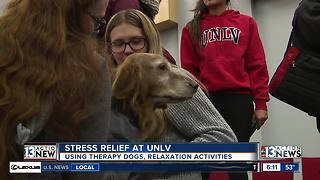 Therapy dogs provide stress relief for UNLV students - Video