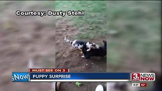 Omaha man surprises girlfriend with puppy swarm - Video