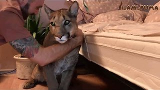 Sneaky Puma Refuses to Take His Vitamins - Video