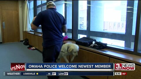 'Peace' OPD's Newest Dog