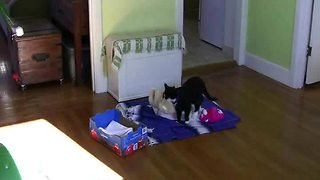 Home surveillance captures kitten wasting entire day - Video