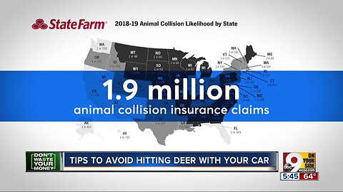 Don't Waste Your Money: Avoid hitting a deer with your car