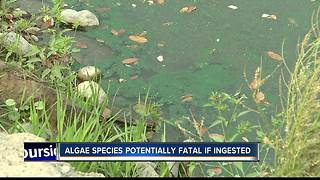 Harmful algae found in Esther Simplot Pond No. 2