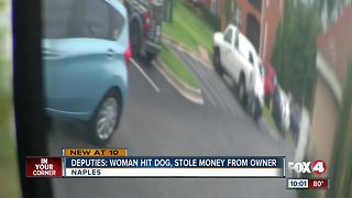 Dog hit, driver then scams victim