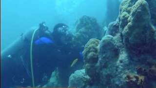 Working to protect coral reefs
