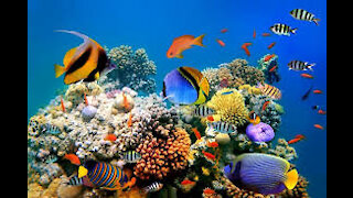 Relax with Marine Life