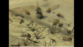 Pesticide used to fight Zika in Florida - Video