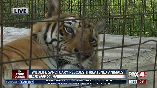 Octagon Wildlife Sanctuary rescues threatened, abused animals -- 7:30am live report - Video