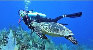 Girl has magical encounter with critically endangered sea turtle