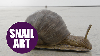 Mechanical SNAILS crawl around the floor at art gallery