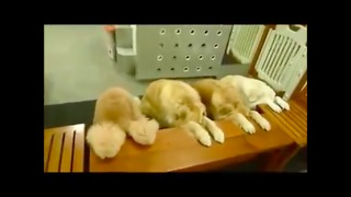 Mommy Is Preparing Meals For Her Dogs When She Turns Around And Sees Them Doing This? - Video