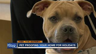 Pet proofing your home for the holidays - Video