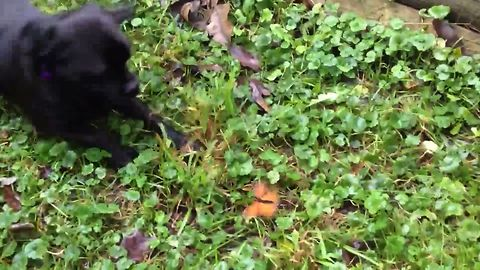 Butterfly Fights with Puppy