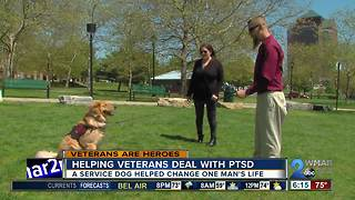 Unconditional love: Service Dog changing veteran's life