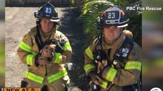 Dogs rescued in suburban West Palm Beach house fire - Video