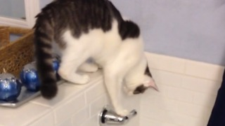 Incredible Cat Turns On The Bath - Video