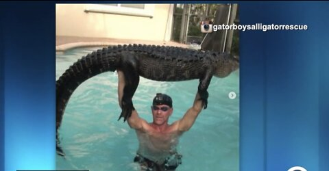 Nearly 9-foot alligator pulled from pool