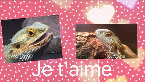 "Dragon Love ""Je t'aime"""