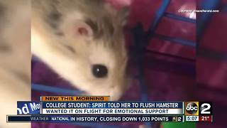 Student who flushed hamster at BWI airport may sue - Video
