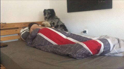 Super cute dog joins his owner in bed to get cuddles
