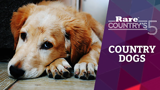 Five Favorite Country Dogs | Rare Country's 5 - Video