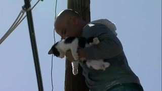 Cat stuck on pole in Phoenix rescued by neighbors - Video