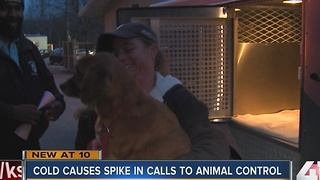 KCMO Animal Control taking calls on cold pets - Video