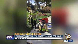 Chula Vista firefighters rescue dog trapped in drain for days - Video