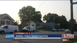 OPD investigates animal fight incident 4p.m. - Video