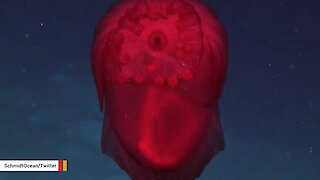 What In The World Is This Deep-Sea Creature?