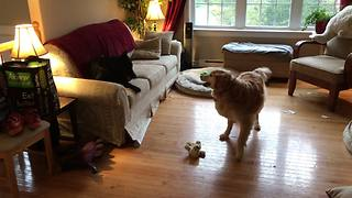 Senior dog surprisingly keeps up with crazy puppy energy