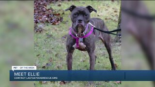 Pet of the Week: Meet Ellie